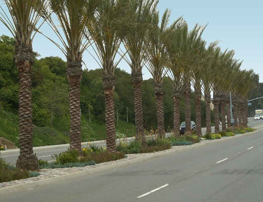 Pacific Coast Highway Median Improvements
