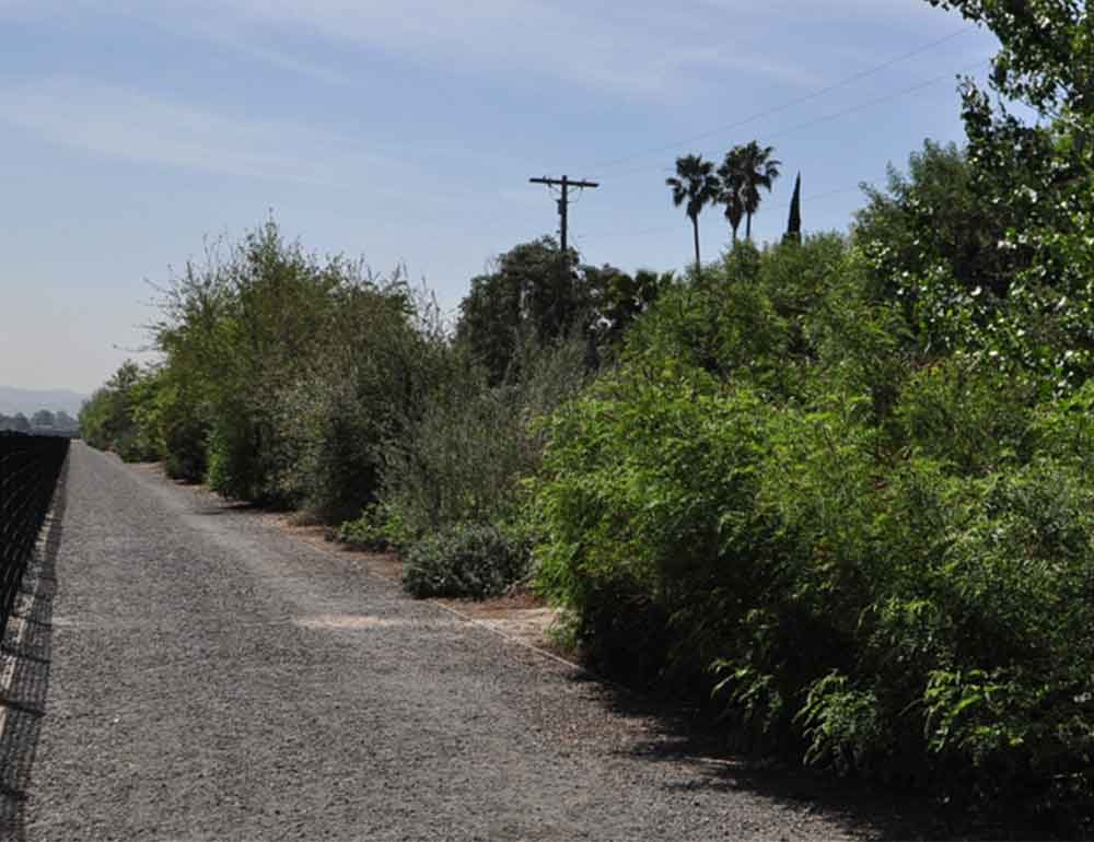 Tujunga Wash Ecosystem Restoration