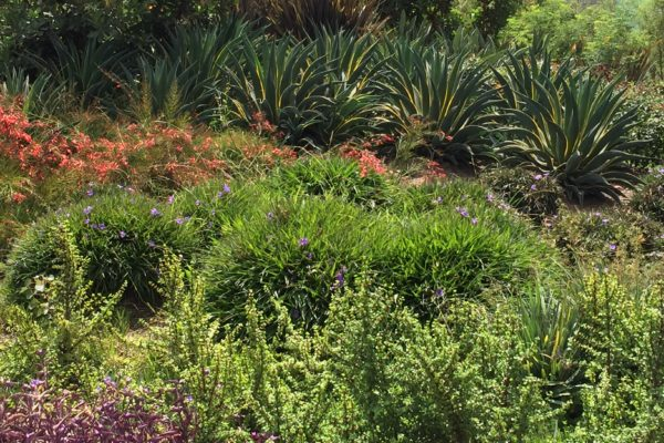 Lynn Capouya to present at 2017 Landscape Expo Long Beach – October 4